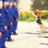 退役搜救犬扒训导员衣角不愿离开